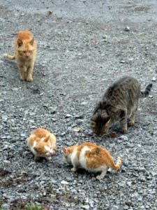 Cats playing on some tarmac