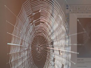 Image of a spider's web